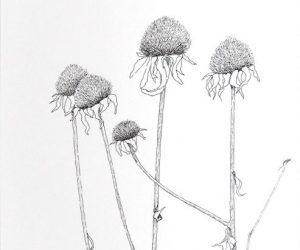"""Winter Cone Flowers, Ink, 14""""x 11"""""""